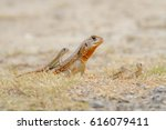 family small scaled lizard ... | Shutterstock . vector #616079411
