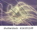 feather grass with fuzz curls...   Shutterstock . vector #616101149