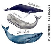 watercolor illustration set of...   Shutterstock . vector #616103231