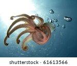 tentacles. octopus in back... | Shutterstock . vector #61613566