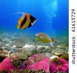 Exotic Fishes  Underwater Worl...