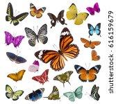 set of butterflies isolated on... | Shutterstock . vector #616159679