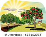 orchard with rows of apple... | Shutterstock .eps vector #616162085