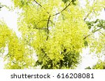 flowers with bouquets of yellow ... | Shutterstock . vector #616208081