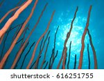 Small photo of Fingers coral reef shape in the blue tropical ocean with the sun over the surface. Beautiful peaceful Caribbean underwater scenery. Sea rod colonies, known as gorgonians.