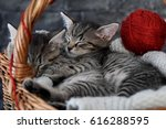 Stock photo cuddled kittens in a wooden basket 616288595