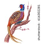 Pheasant On An Old Flowering...