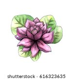 watercolor pink lotus with leaf ...   Shutterstock . vector #616323635