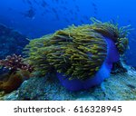 Anemone With Blue Water In...