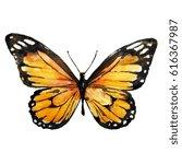 Beautiful Yellow Butterfly...
