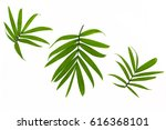 Tropical Leaves Isolated On...