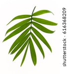 tropical leaves isolated on... | Shutterstock . vector #616368209