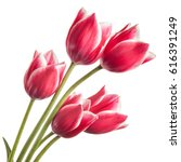 bouquet of flowers isolated on... | Shutterstock . vector #616391249
