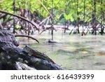 Horizontal Photo Of Mudskipper...