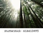foggy beech forest | Shutterstock . vector #616613495