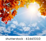 Autumn Yellow Leaves In Sun...