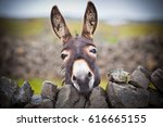 A Nice Donkey Under The Rain ....