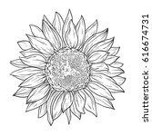 sunflower in lines. line art... | Shutterstock .eps vector #616674731