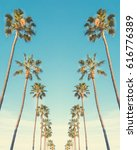 a row of tall palm trees in san ... | Shutterstock . vector #616776389