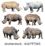 white rhinoceros  square lipped ... | Shutterstock . vector #616797365