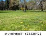 spring at backyard and garden | Shutterstock . vector #616825421