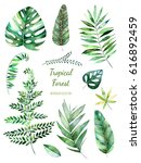 tropical leafy collection.... | Shutterstock . vector #616892459