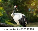 red crowned crane | Shutterstock . vector #616912439
