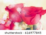 Stock photo red rose in the garden close up 616977845