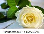 white rose on white festive... | Shutterstock . vector #616998641