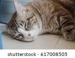 Small photo of Stray cat Rove cat stood on the roadside