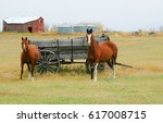 Horses And Old  Wagon In Field...