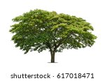 trees isolated on white... | Shutterstock . vector #617018471