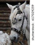 portrait of a horse. white... | Shutterstock . vector #617029259