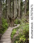 Small photo of This wooden footpath winds through the forest toward the coastline at Cape Flattery in the state of Washington. Cape Flattery is the most northwestern point in the contiguous United States.