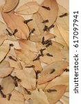 dried bay leaves and cloves on...   Shutterstock . vector #617097941