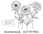 hand drawing peony flowers.... | Shutterstock .eps vector #617197901