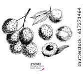 hand drawn set of exotic... | Shutterstock . vector #617271464