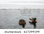 Two Ducks On Lake In Winter...
