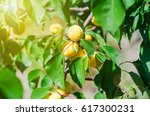 green plum leaves background in ... | Shutterstock . vector #617300231