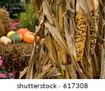 This is a shot of some indian corn and some cornstalks with a Halloween background. - stock photo