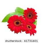 red gerbera flowers with green ... | Shutterstock . vector #61731601