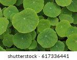 green leaves background  | Shutterstock . vector #617336441