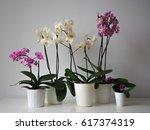 orchids | Shutterstock . vector #617374319