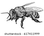 bee illustration  drawing ... | Shutterstock .eps vector #617411999