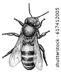 bee illustration  drawing ... | Shutterstock .eps vector #617412005