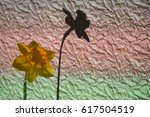Small photo of Daffodil against striped crinkle paper