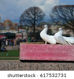 White Doves Posing Against The...