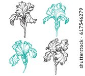 blooming and budding iris...   Shutterstock .eps vector #617546279