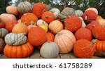 Assorted Pumpkin Varieties...