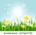 flowers grow on a meadow in the ... | Shutterstock .eps vector #617661725